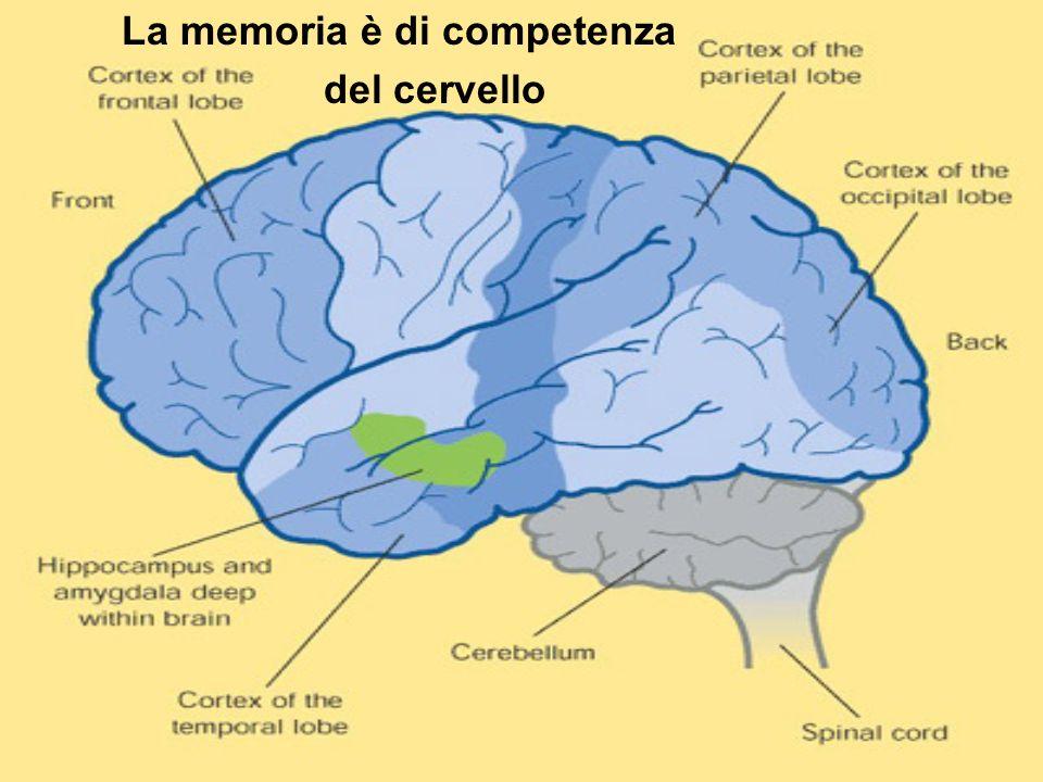 La memoria è di competenza