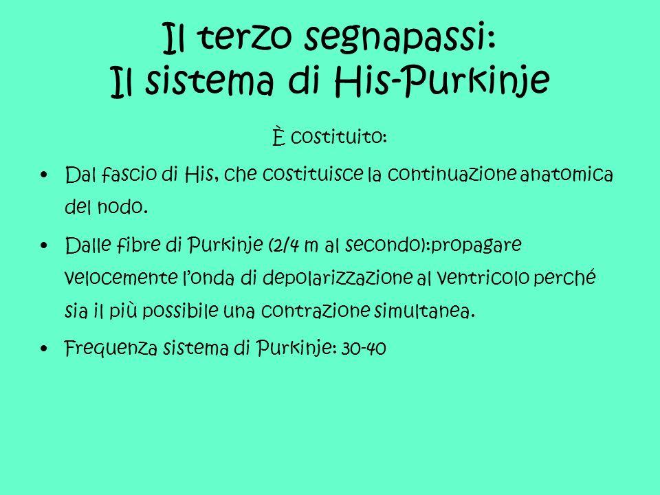Il terzo segnapassi: Il sistema di His-Purkinje