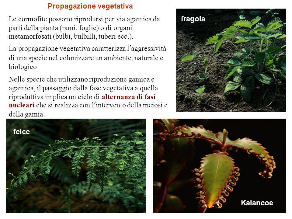 Propagazione vegetativa