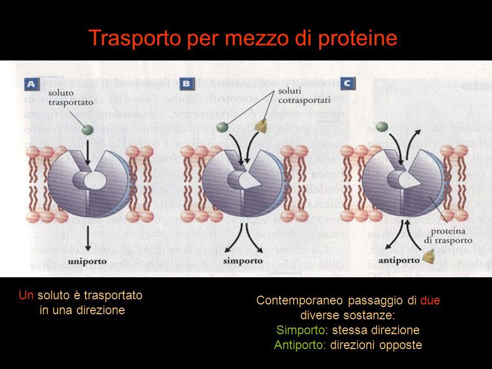 Trasporto per mezzo di proteine