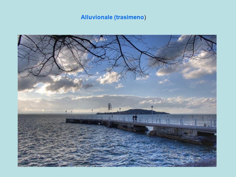 Alluvionale (trasimeno)