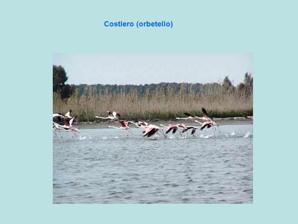Costiero (orbetello)