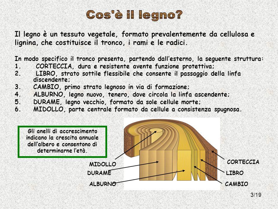 Il legno è un tessuto vegetale, formato prevalentemente da cellulosa e