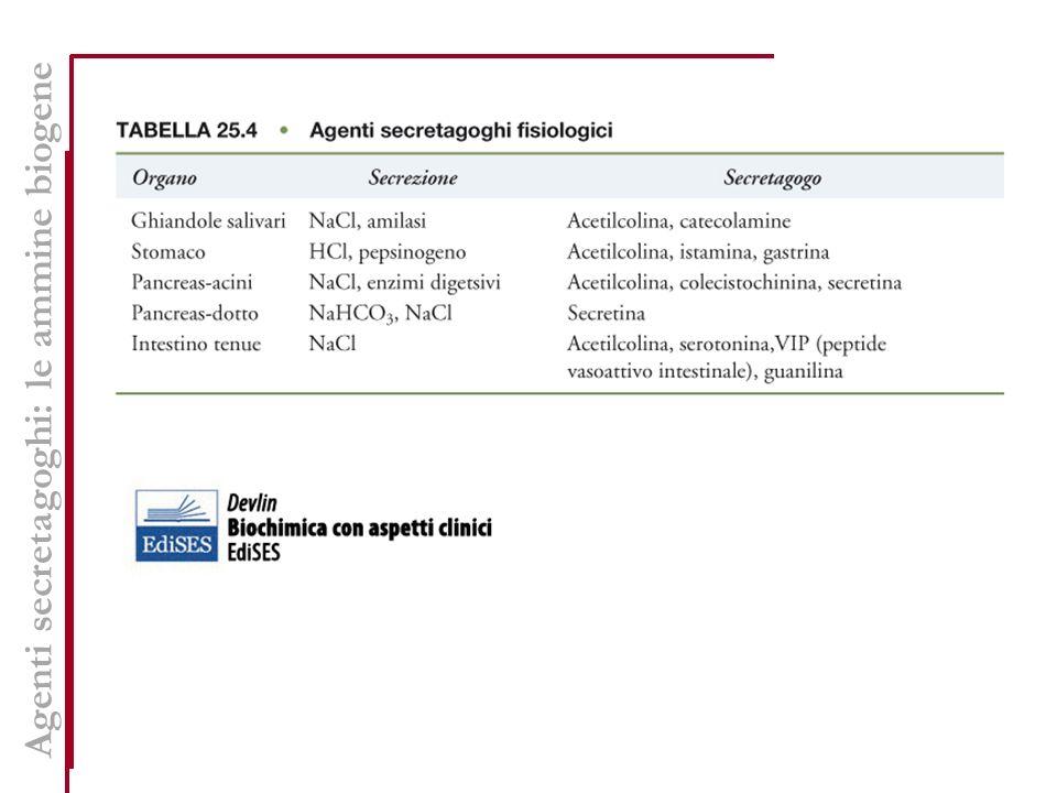 Agenti secretagoghi: le ammine biogene