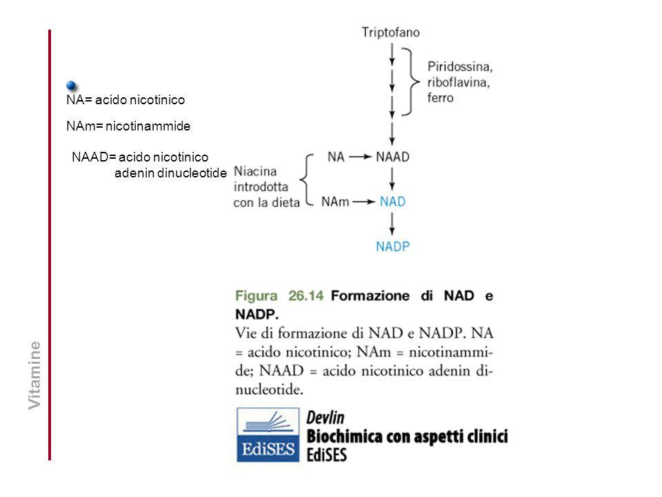 Vitamine NA= acido nicotinico NAm= nicotinammide