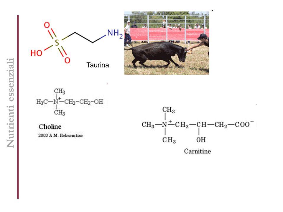 Nutrienti essenziali Taurina