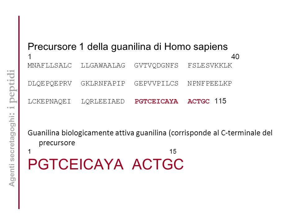PGTCEICAYA ACTGC Precursore 1 della guanilina di Homo sapiens