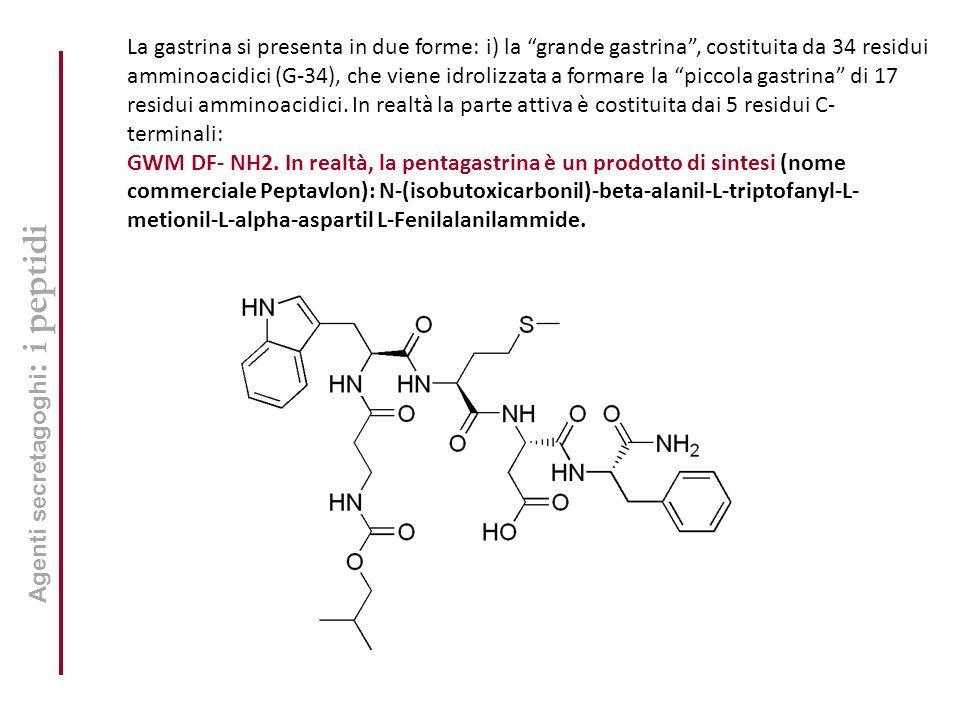 La gastrina si presenta in due forme: i) la grande gastrina , costituita da 34 residui amminoacidici (G-34), che viene idrolizzata a formare la piccola gastrina di 17 residui amminoacidici. In realtà la parte attiva è costituita dai 5 residui C- terminali: