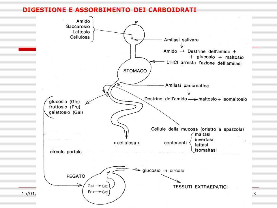 DIGESTIONE E ASSORBIMENTO DEI CARBOIDRATI