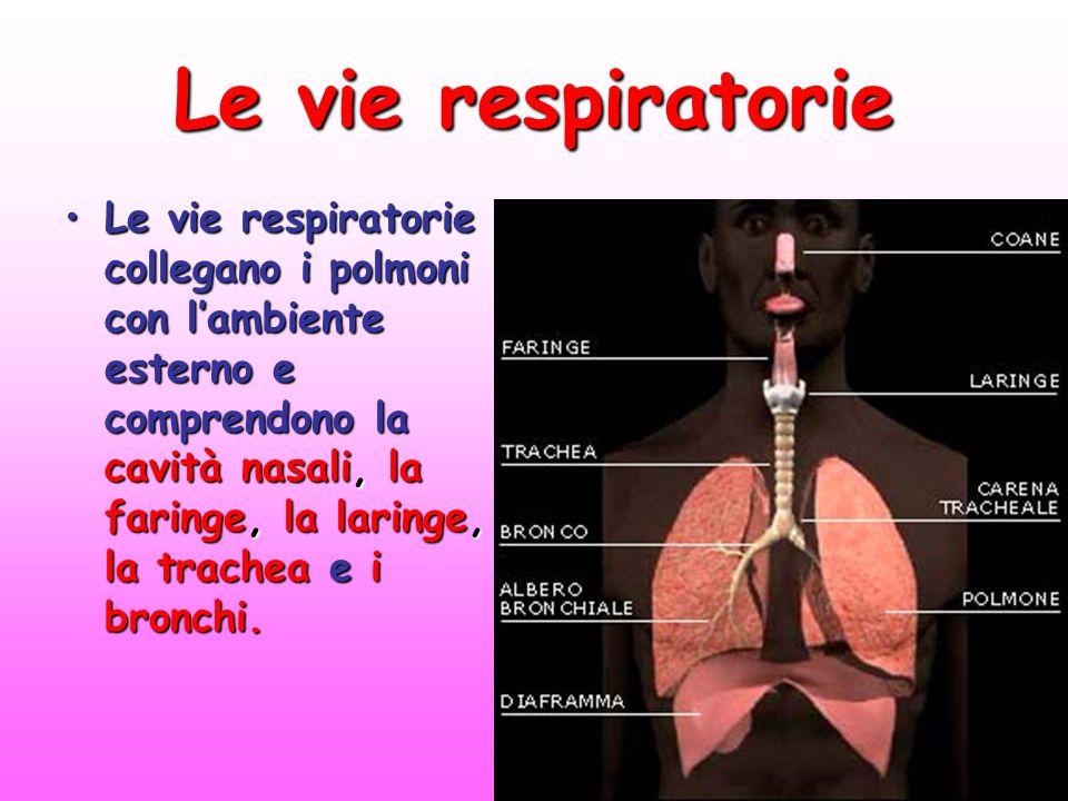 Le vie respiratorie