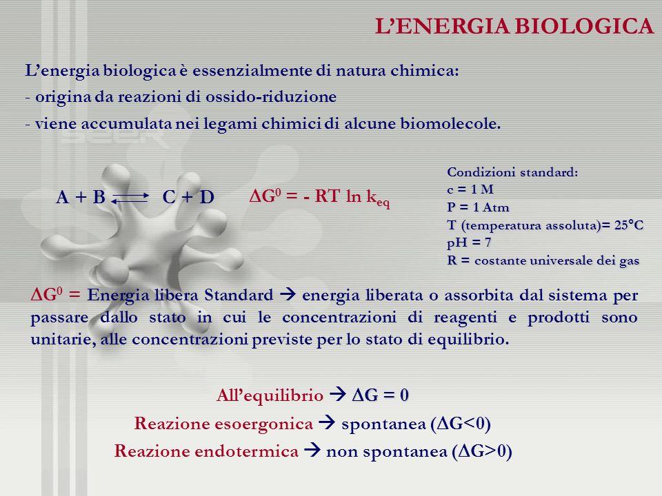 L'ENERGIA BIOLOGICA A + B C + D G0 = - RT ln keq