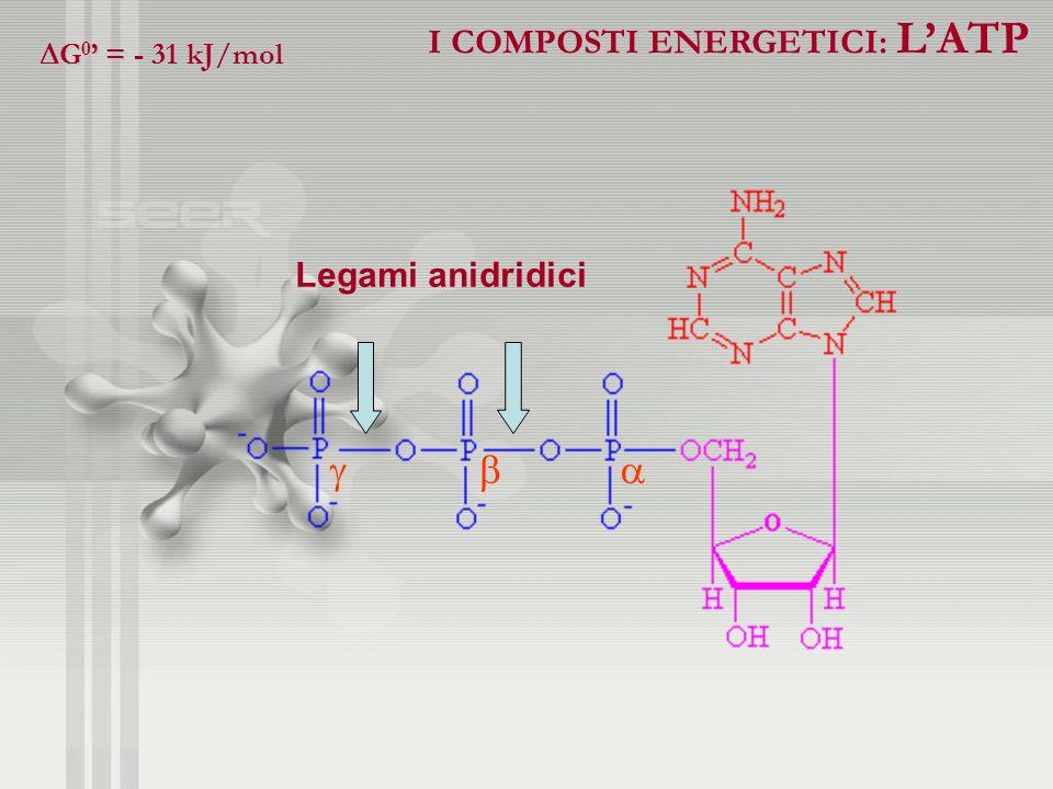    I COMPOSTI ENERGETICI: L'ATP Legami anidridici