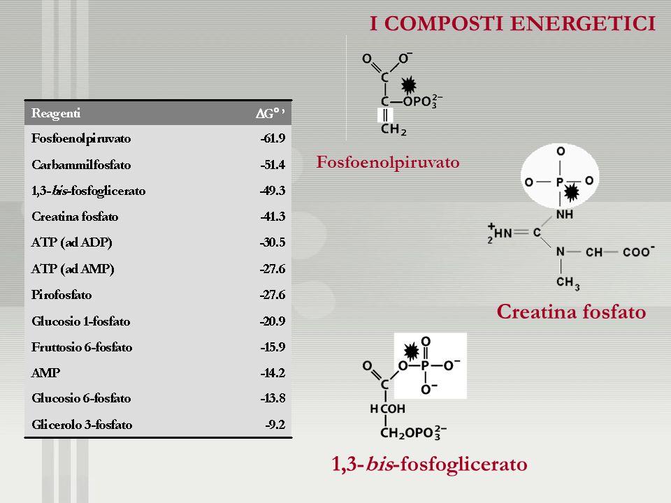 I COMPOSTI ENERGETICI Creatina fosfato 1,3-bis-fosfoglicerato