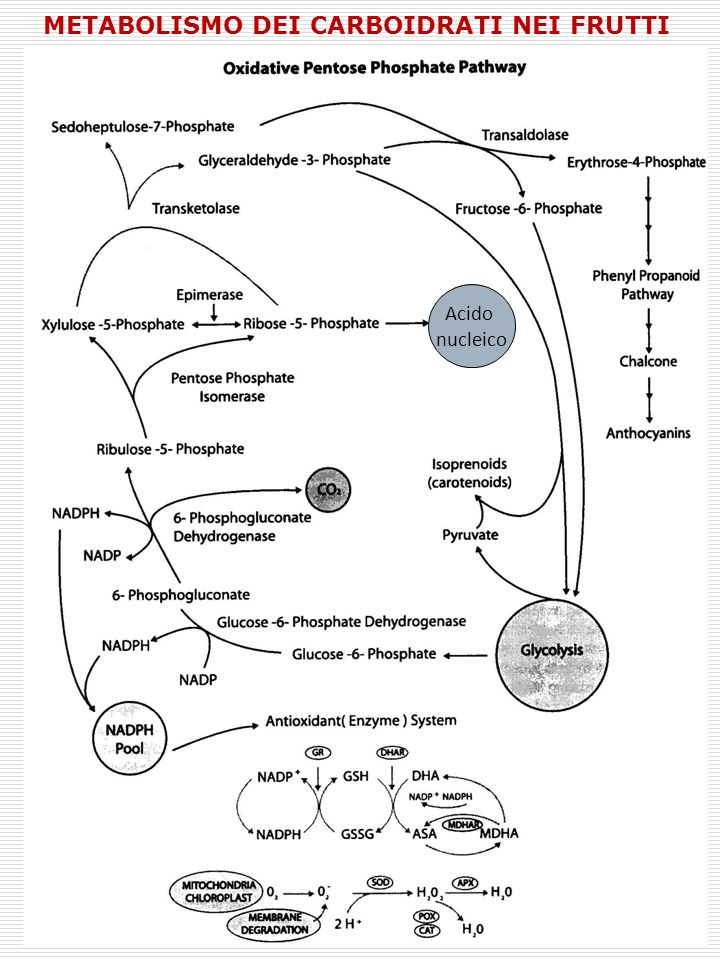 Metabolismo dei carboidrati nei frutti
