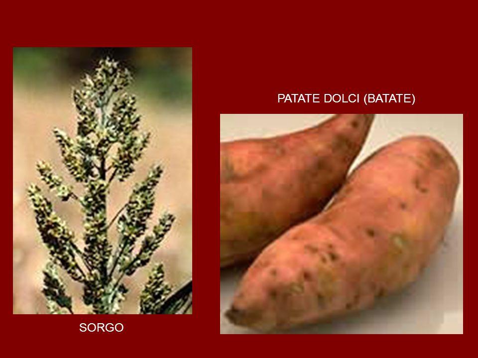 PATATE DOLCI (BATATE) SORGO