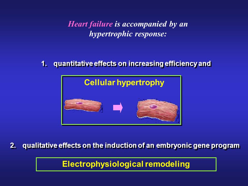 Heart failure is accompanied by an hypertrophic response: