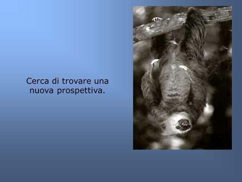 Cerca di trovare una nuova prospettiva.