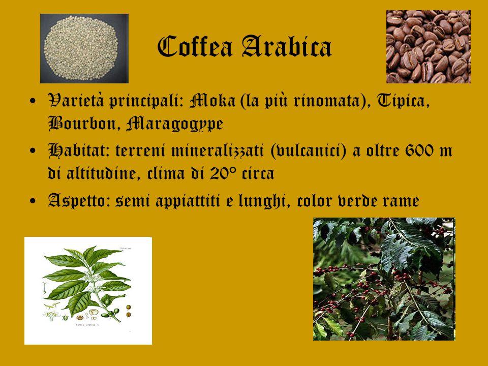 Coffea Arabica Varietà principali: Moka (la più rinomata), Tipica, Bourbon, Maragogype.