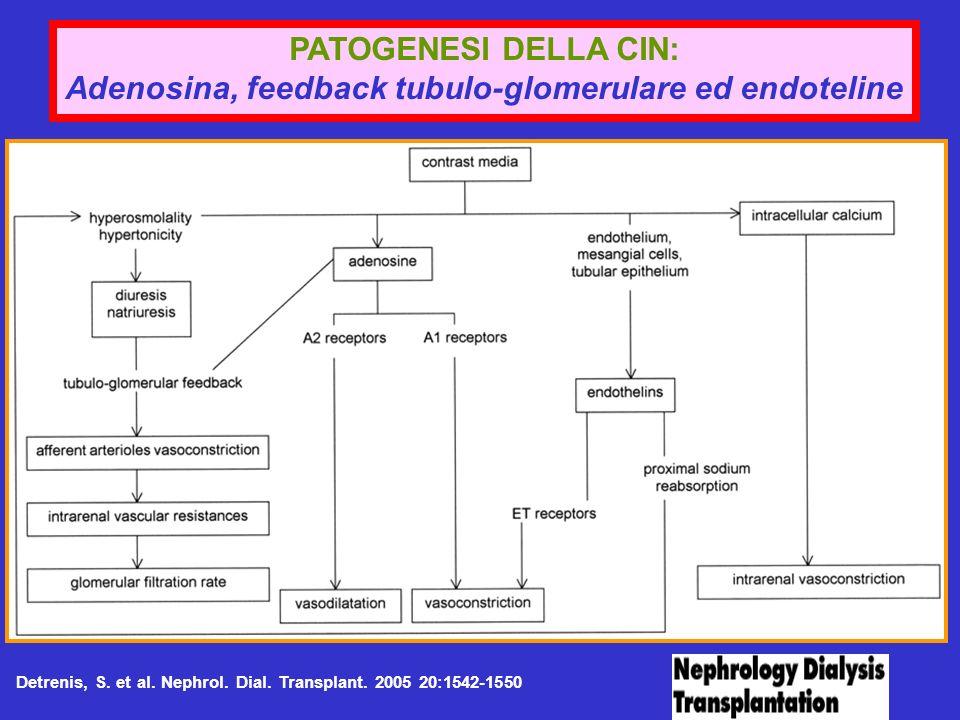 Adenosina, feedback tubulo-glomerulare ed endoteline