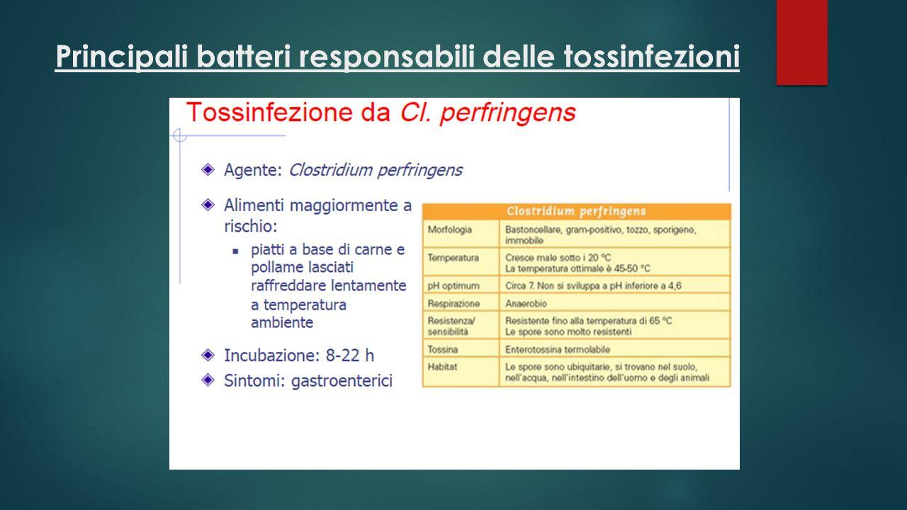 Principali batteri responsabili delle tossinfezioni