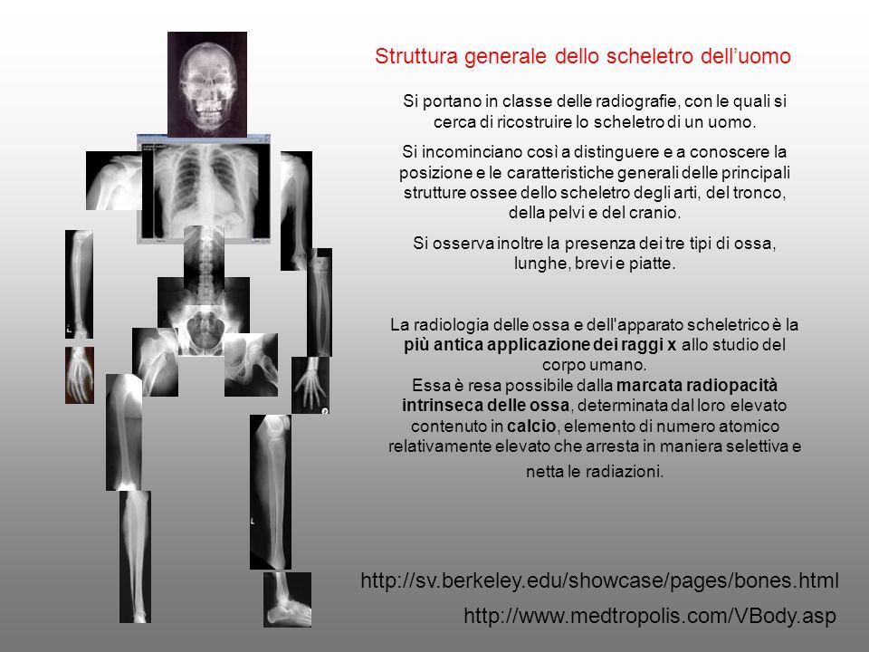 Struttura generale dello scheletro dell'uomo