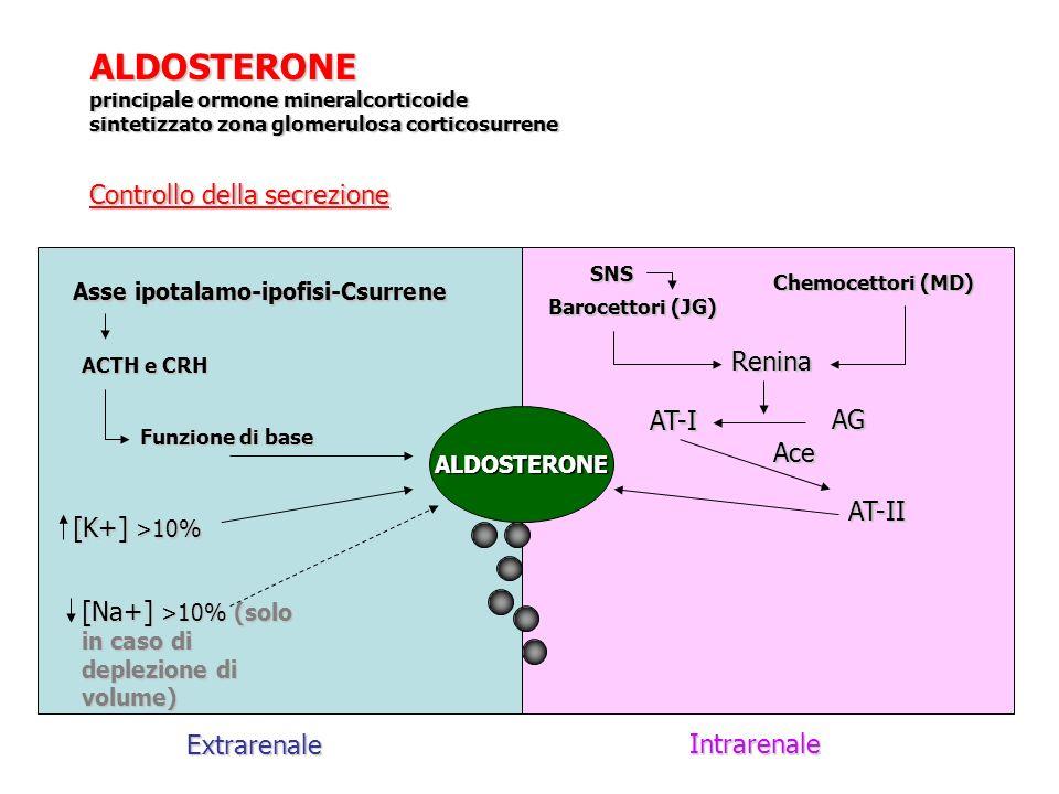 ALDOSTERONE principale ormone mineralcorticoide sintetizzato zona glomerulosa corticosurrene