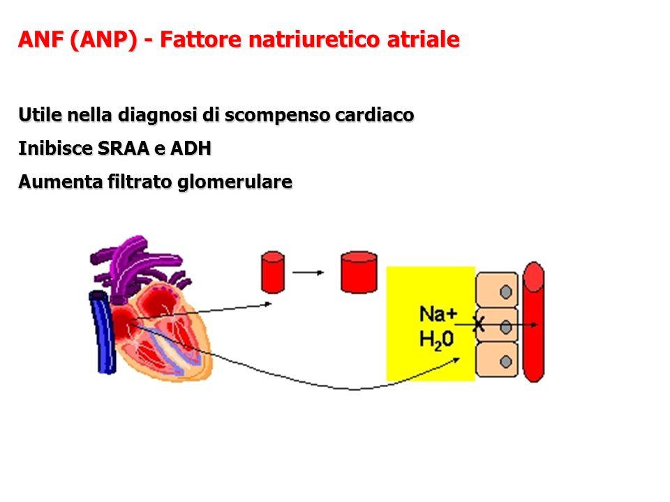 ANF (ANP) - Fattore natriuretico atriale