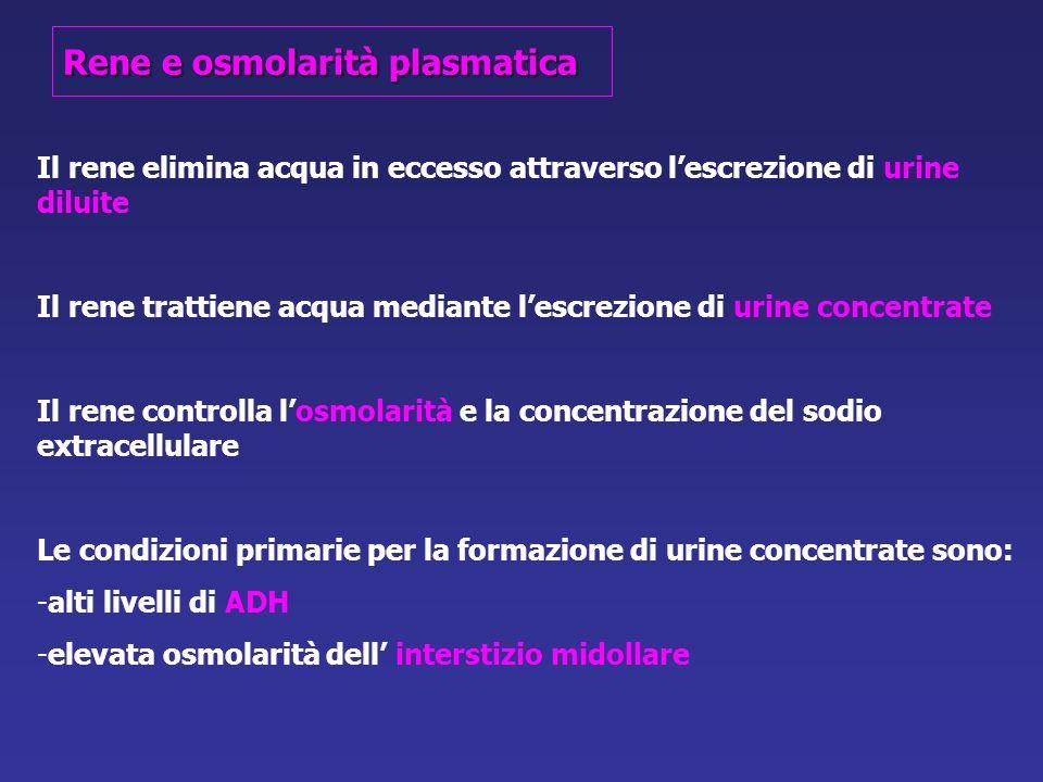 Rene e osmolarità plasmatica