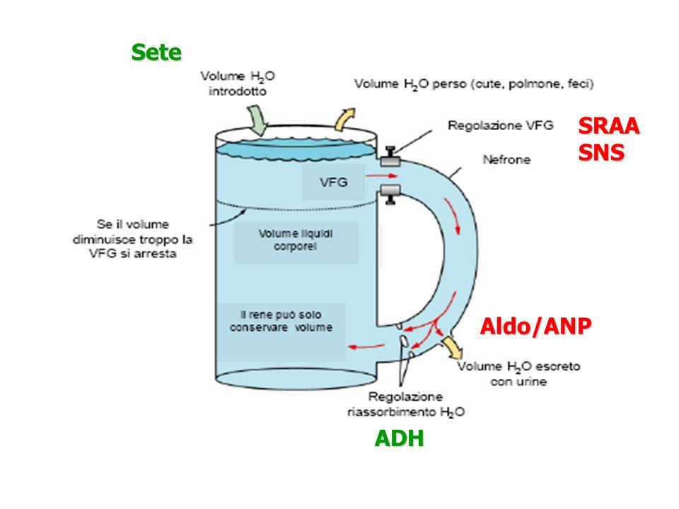 Sete SRAA SNS Aldo/ANP ADH