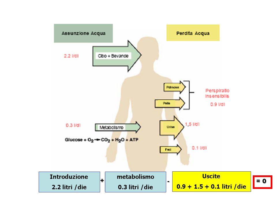 + - = 0 Introduzione 2.2 litri /die metabolismo 0.3 litri /die Uscite