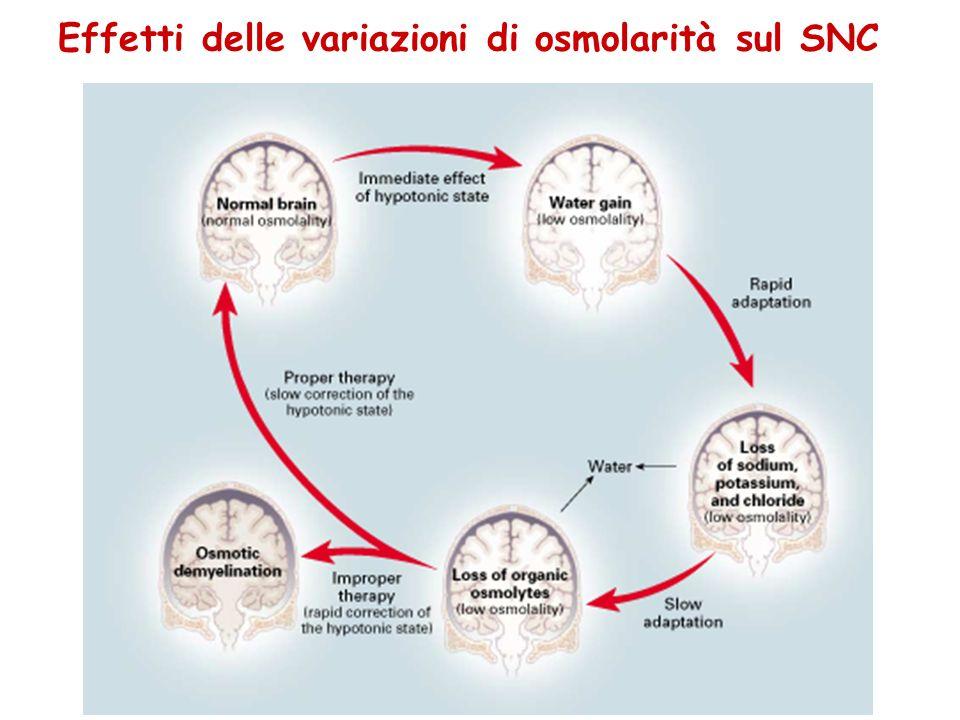 Effetti delle variazioni di osmolarità sul SNC