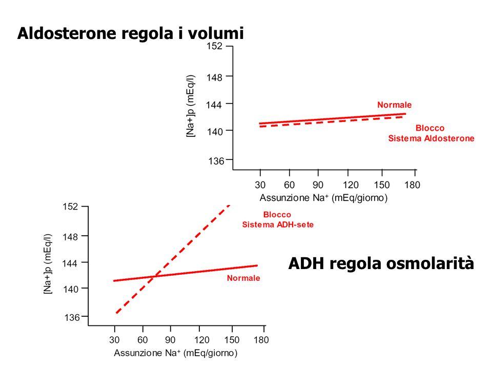 Aldosterone regola i volumi