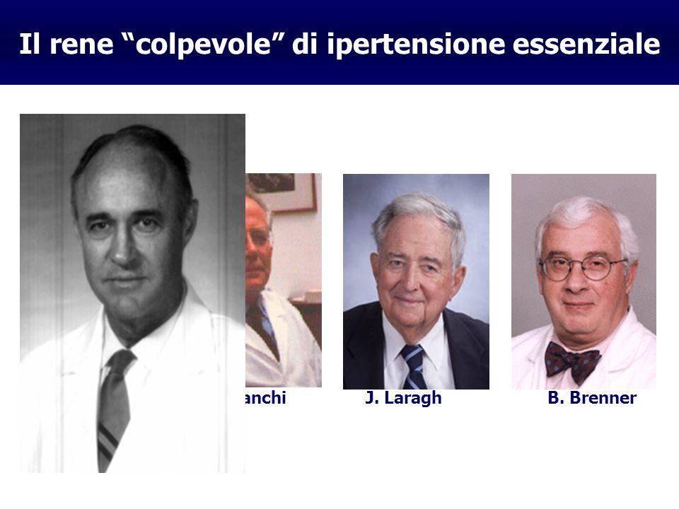 Il rene colpevole di ipertensione essenziale