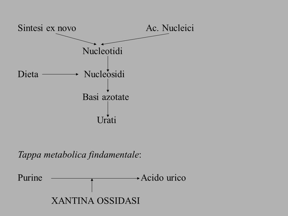 Sintesi ex novo Ac. Nucleici