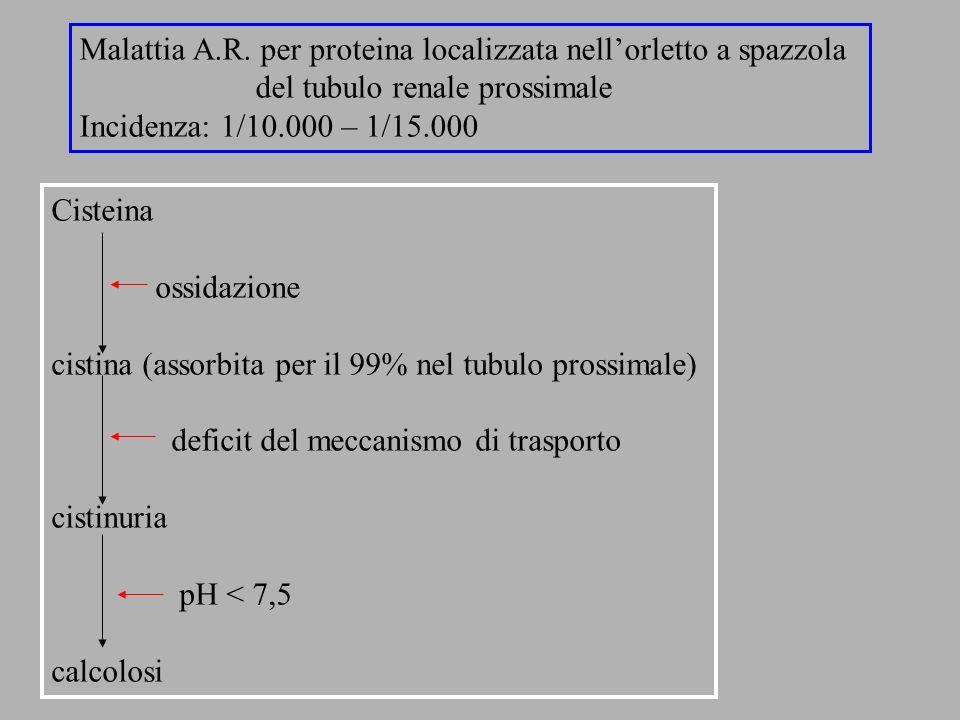 Malattia A.R. per proteina localizzata nell'orletto a spazzola