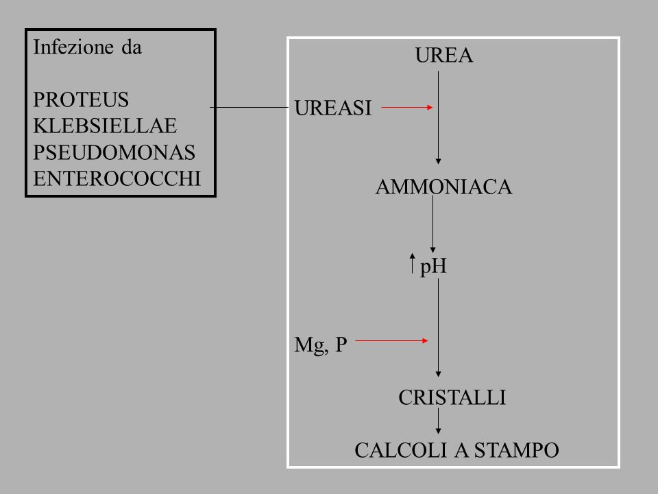 Infezione daPROTEUS. KLEBSIELLAE. PSEUDOMONAS. ENTEROCOCCHI. UREA. UREASI. AMMONIACA. pH. Mg, P. CRISTALLI.