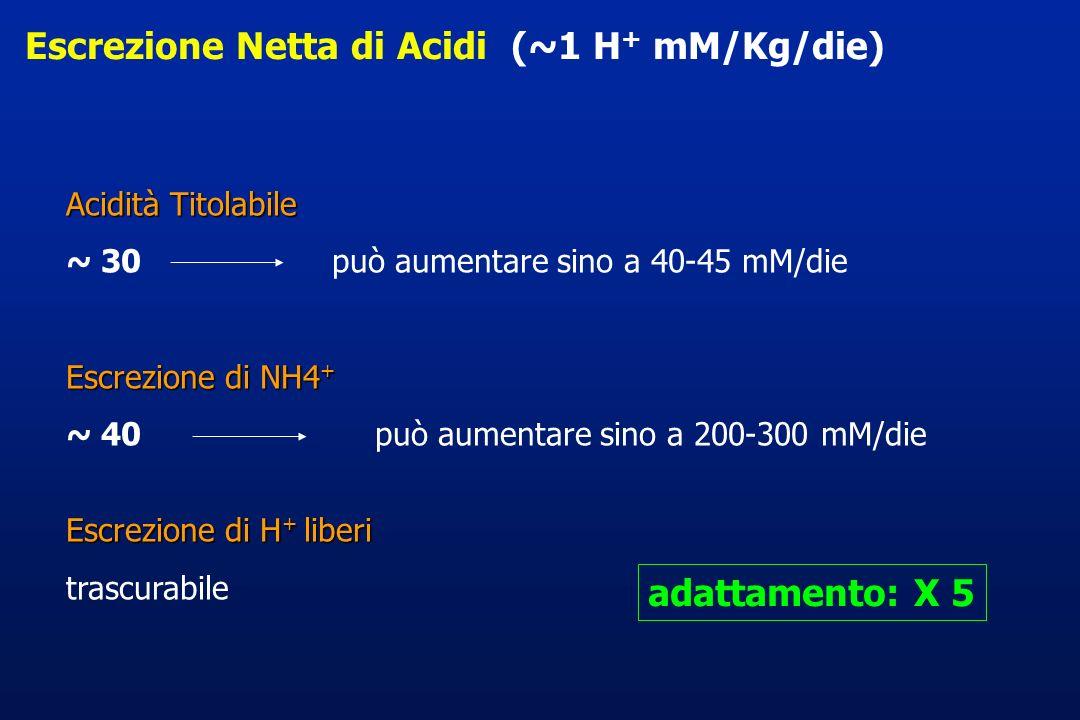 Escrezione Netta di Acidi (~1 H+ mM/Kg/die)