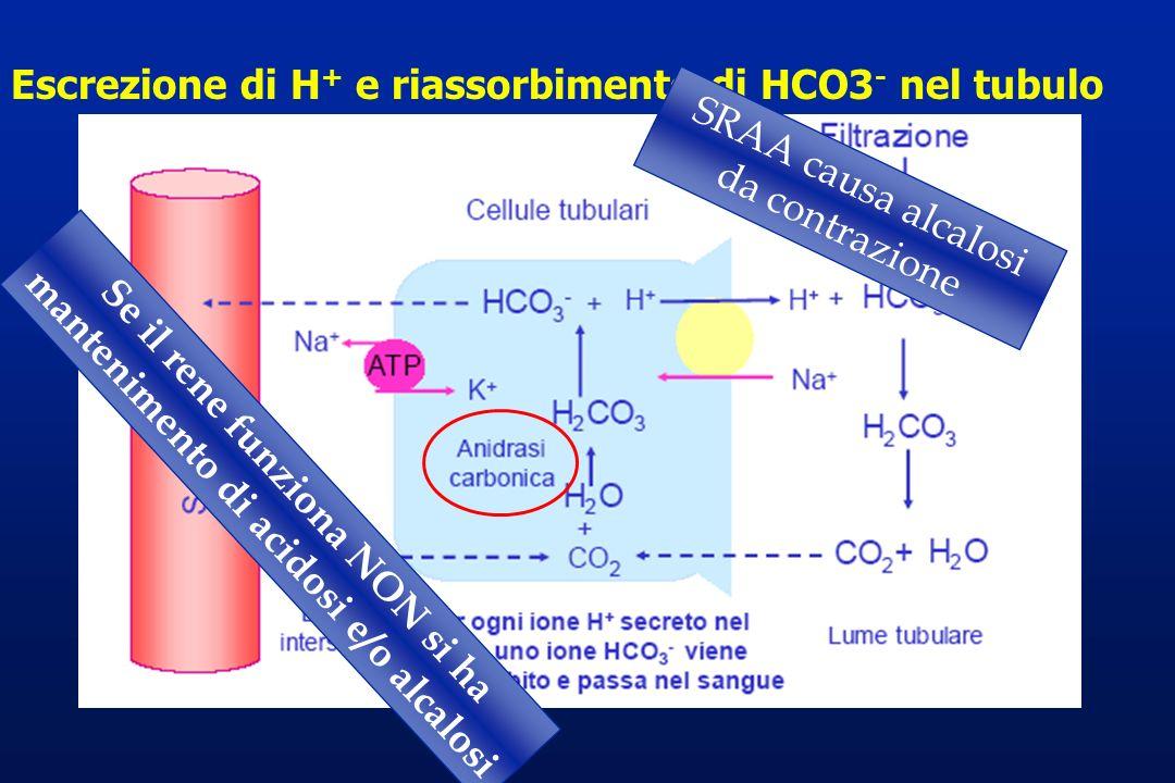 Se il rene funziona NON si ha mantenimento di acidosi e/o alcalosi