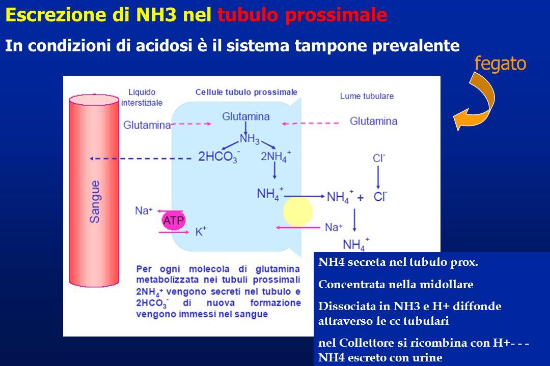 Escrezione di NH3 nel tubulo prossimale