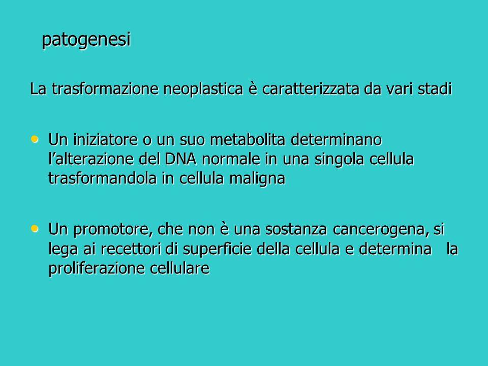 patogenesi La trasformazione neoplastica è caratterizzata da vari stadi.