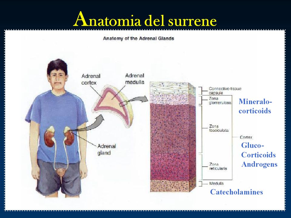 Anatomia del surrene
