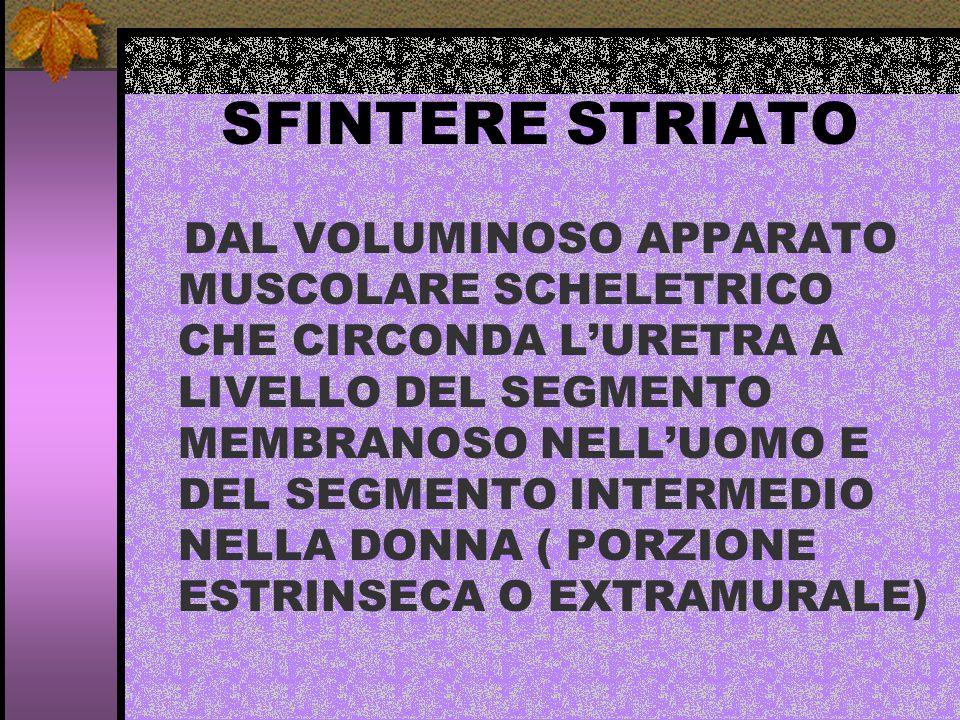 SFINTERE STRIATO