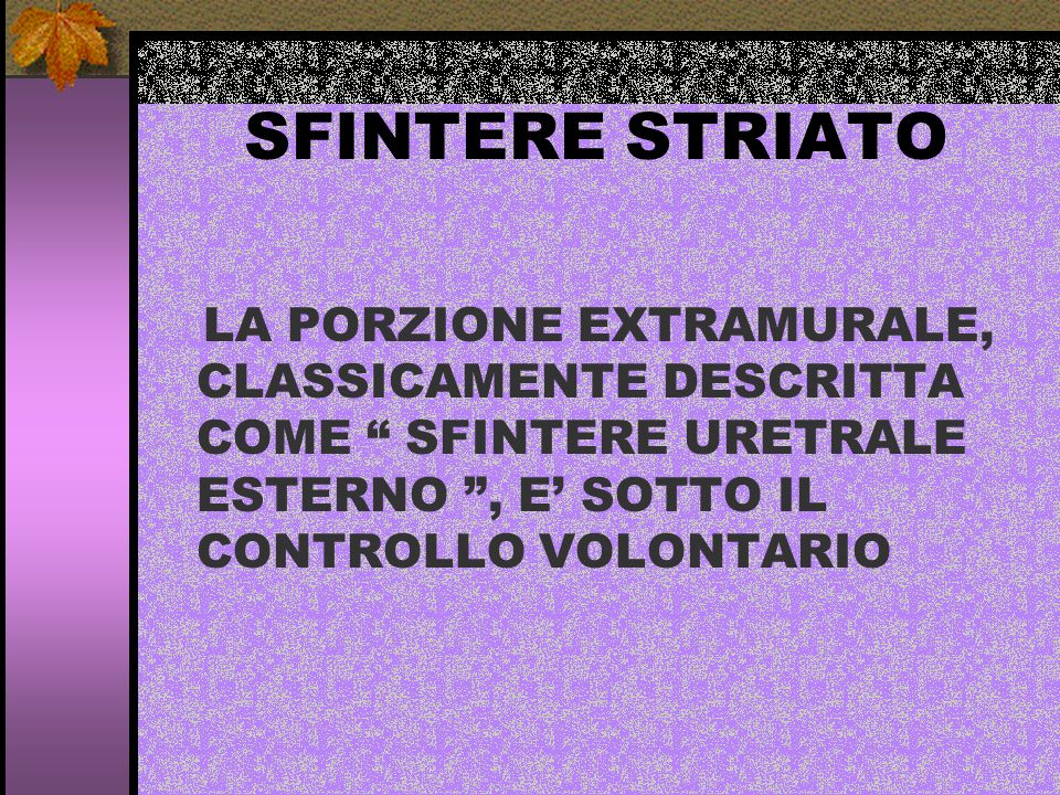 SFINTERE STRIATO LA PORZIONE EXTRAMURALE, CLASSICAMENTE DESCRITTA COME SFINTERE URETRALE ESTERNO , E' SOTTO IL CONTROLLO VOLONTARIO.