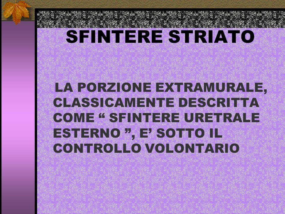 SFINTERE STRIATOLA PORZIONE EXTRAMURALE, CLASSICAMENTE DESCRITTA COME SFINTERE URETRALE ESTERNO , E' SOTTO IL CONTROLLO VOLONTARIO.