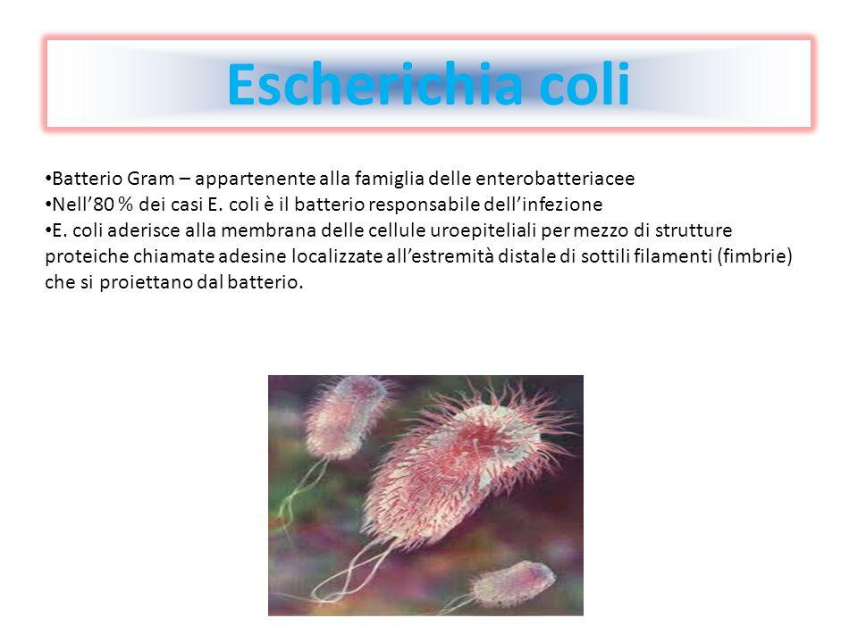 Escherichia coli Batterio Gram – appartenente alla famiglia delle enterobatteriacee.
