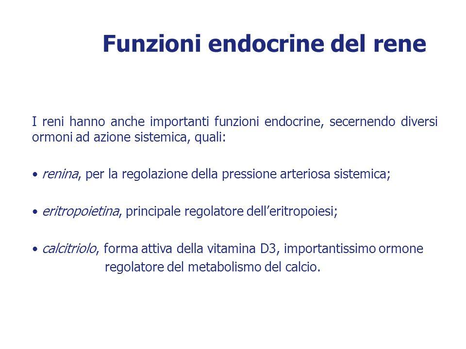 Funzioni endocrine del rene