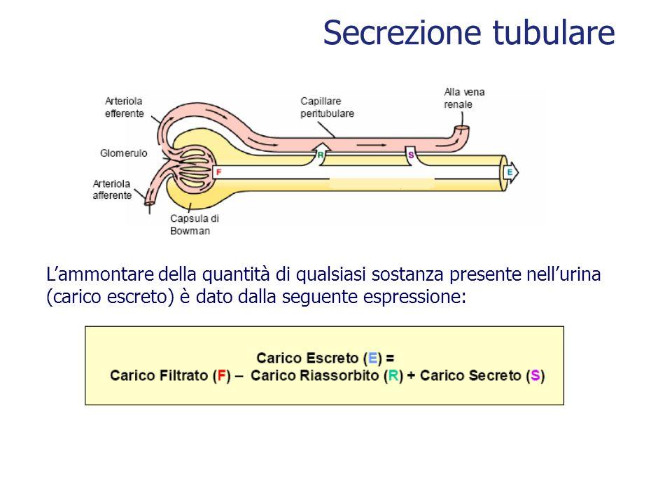 Secrezione tubulare L'ammontare della quantità di qualsiasi sostanza presente nell'urina. (carico escreto) è dato dalla seguente espressione: