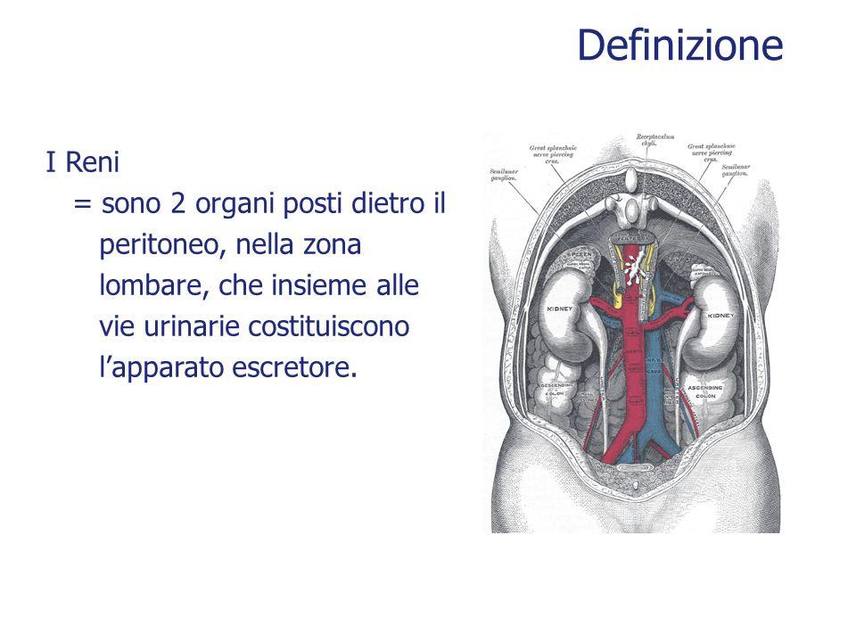 Definizione I Reni = sono 2 organi posti dietro il