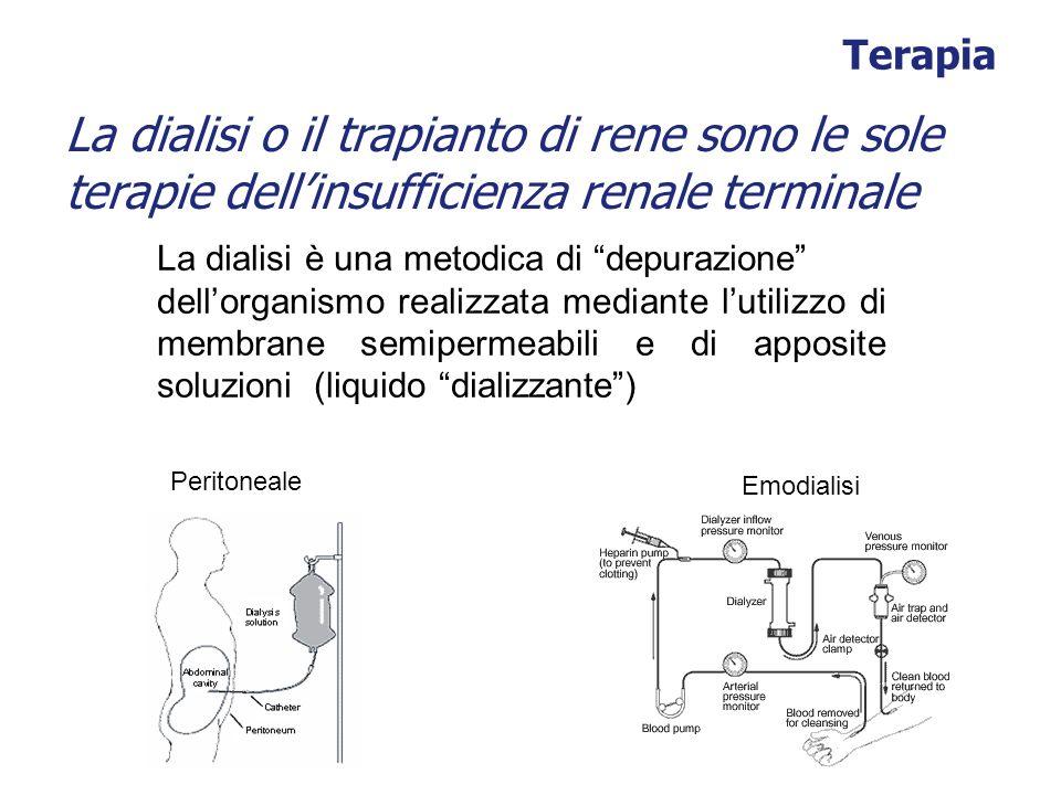 Terapia La dialisi o il trapianto di rene sono le sole terapie dell'insufficienza renale terminale.