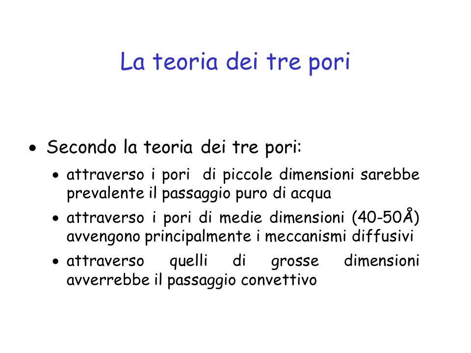 La teoria dei tre pori Secondo la teoria dei tre pori:
